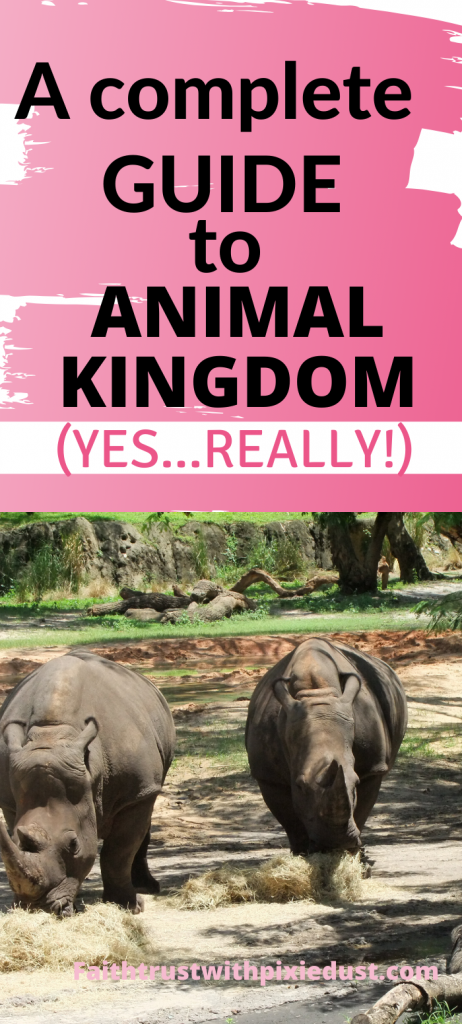 Animal Kingdom Guide